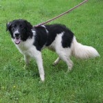 SPA chien à adopter Tigrou ADOPTE