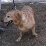 SPA chien à adopter Caramela ADOPTEE