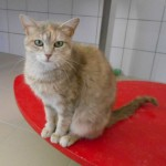 SPA chat à adopter Griotte ADOPTEE