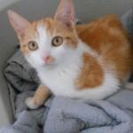 SPA chat à adopter Maki ADOPTE