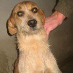 SPA chien à adopter Neska ADOPTEE