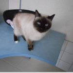 SPA chat à adopter Bianca ADOPTEE