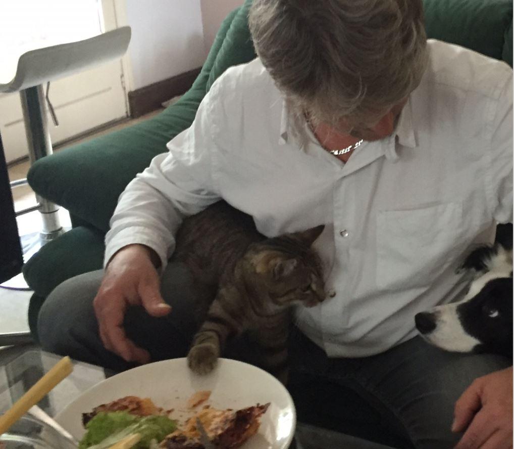 loustic3 adoption chien chat spa du centre loiret orl ans fert st aubin chilleurs. Black Bedroom Furniture Sets. Home Design Ideas