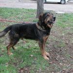 SPA chien à adopter Caler ADOPTE