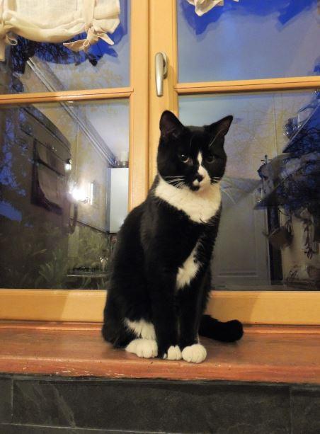 machtoc adoption chien chat spa du centre loiret orl ans fert st aubin chilleurs. Black Bedroom Furniture Sets. Home Design Ideas