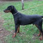 SPA chien à adopter Magnum ADOPTE