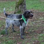 SPA chien à adopter Rubis ADOPTE