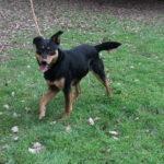 SPA chien à adopter Lock ADOPTE