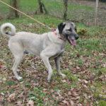 SPA chien à adopter Zara ADOPTEE
