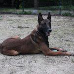 SPA chien à adopter Falco ADOPTE