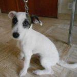 SPA chien à adopter Maxou ADOPTE