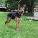 SPA chien à adopter Rex ADOPTE