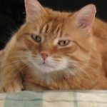 SPA chat à adopter Caramel