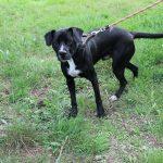 SPA chien à adopter Balthazar ADOPTE