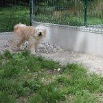 SPA chien à adopter Machenka ADOPTEE