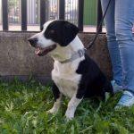 SPA chien à adopter Zape ADOPTE