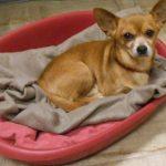 SPA chien à adopter Kiki ADOPTE