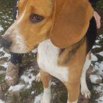 SPA chien à adopter Dalton ADOPTE