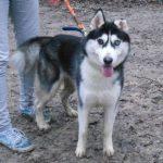 SPA chien à adopter Niko ADOPTE