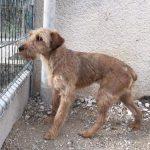 SPA chien à adopter Newton ADOPTE
