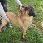SPA chien à adopter Tobi