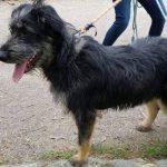 SPA chien à adopter Dana ADOPTEE