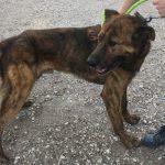 SPA chien à adopter Aker