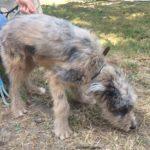 SPA chien à adopter Lacasito ADOPTE