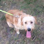 SPA chien à adopter Milou