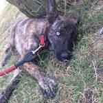 SPA chien à adopter Régaliz ADOPTEE
