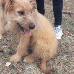 SPA chien à adopter Valentin ADOPTE