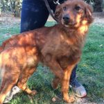 SPA chien à adopter Pedro