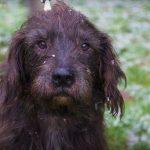 SPA chien à adopter Marceau ADOPTE