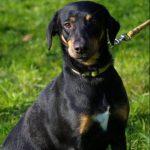 SPA chien à adopter Aska
