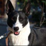SPA chien à adopter Flipi