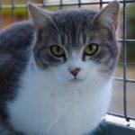 SPA chat à adopter Miya ADOPTEE