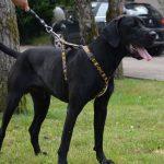 SPA chien à adopter Bob - Solo