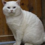 SPA chat à adopter Blanblan ADOPTE