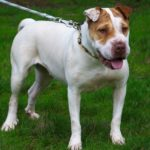 SPA chien à adopter Drya