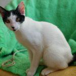 SPA chat à adopter Bizi ADOPTE