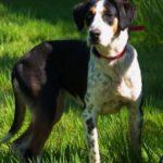 SPA chien à adopter Lola