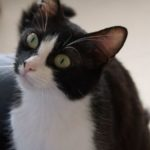 SPA chat à adopter Rita ADOPTEE