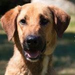 SPA chien à adopter Jimmyna