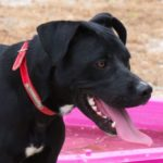 SPA chien à adopter Falco