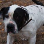 SPA chien à adopter Filou