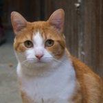SPA chat à adopter Gimli ADOPTE
