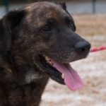 SPA chien à adopter Nélo