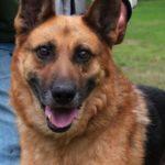 SPA chien à adopter Zéro