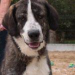 SPA chien à adopter Niebla