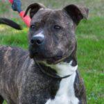 SPA chien à adopter Nina